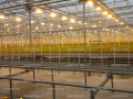 Stevia greenhouse cultivation testing site 2.jpg